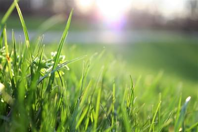 Preparing Your Pennsylvania Yard for the Spring and Summer Season